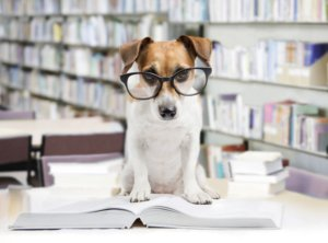 dog wearing glasses reading books at the library